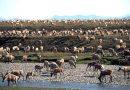 Biden signals plans to halt oil activity in Arctic refuge