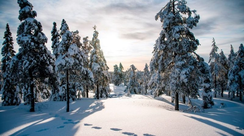 Northern Sweden could see up to 30 cm of snow this weekend