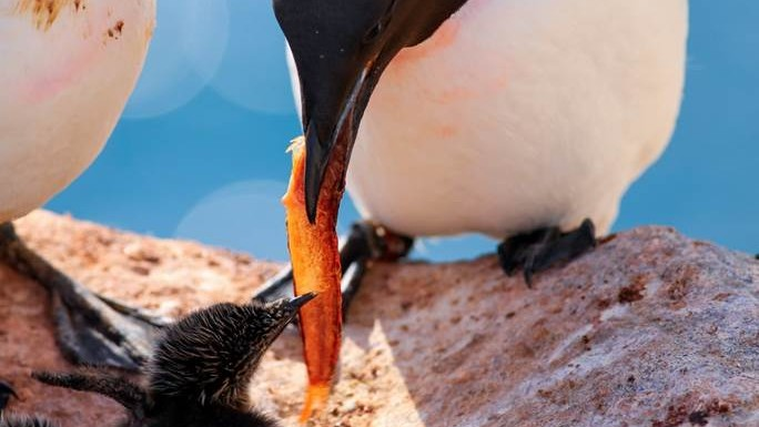 Seabirds & their vulnerability to a warming climate: Q&A with researcher Emily Choy