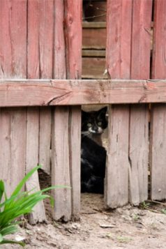 free-roaming-cats-often-appear-hidden