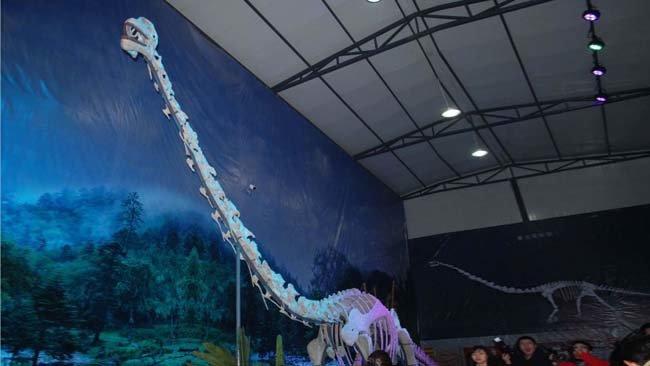 Le squelette Qijianglong se trouve maintenant dans un musée local de la ville de Qijiang.