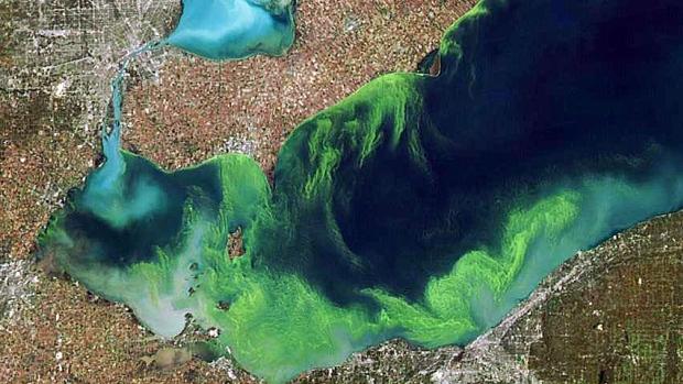 Pollution agricole au large de Toronto et dans la région du Niagara dans la province de l'Ontario.(The Canadian Press)