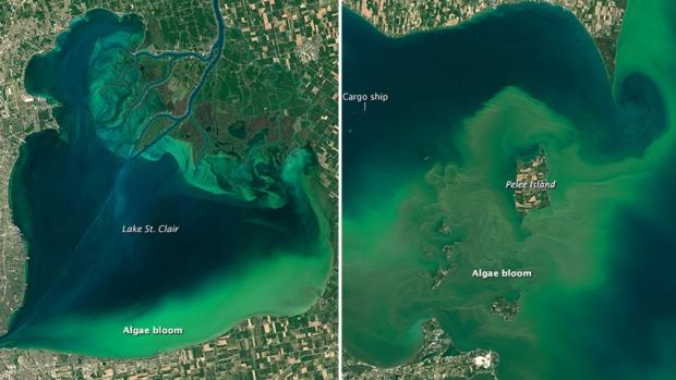 Cette pollution se métamorphose en prolifération d'algues bleues ajoute beaucoup de couleurs à nos grand lacs par exemple comme dans cette toute récente photographie notamment du lac St-Clair dans la région des Grands Lacs. Mais elle finit sa course dans nos océans et donne naissance à des zones mortes.