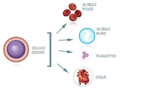 cellules5