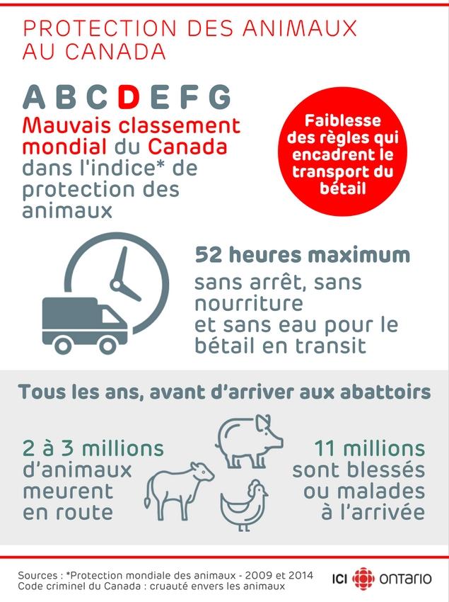 62182159-indice-bien-etre-animaux-elevage-canada-ici-radio-canada-2016