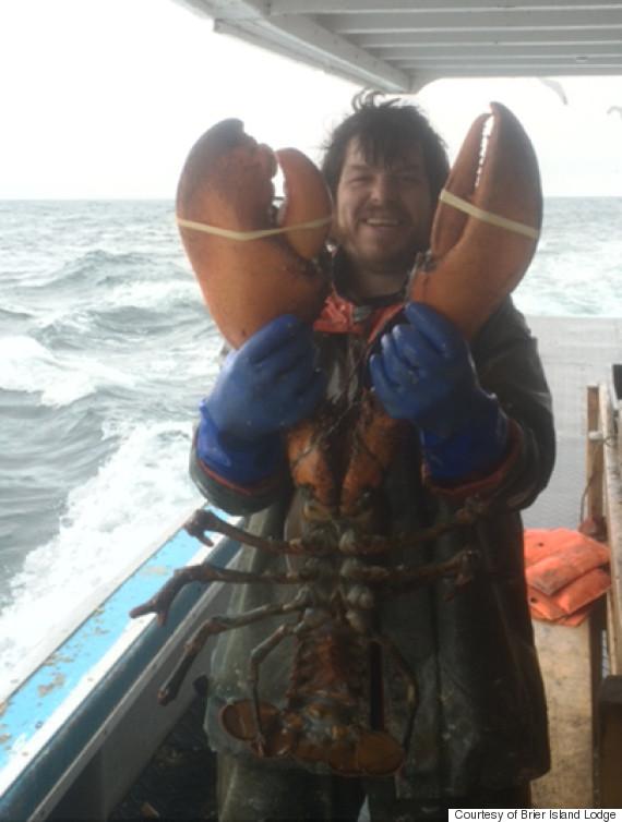 Jesse Tudor, un pêcheur canadien, a capturé au large de la Nouvelle-Écosse un homard de 17 livres, soit 7,7 kilos