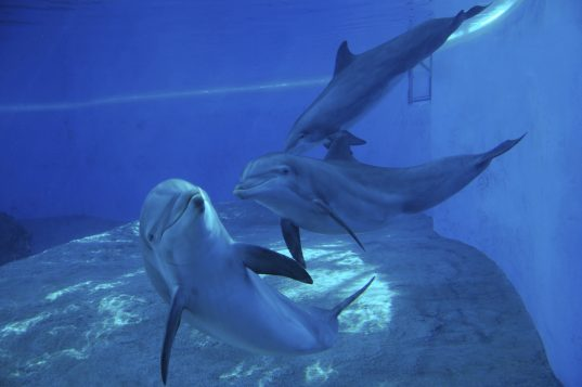 Dauphins en captivié (IStock)