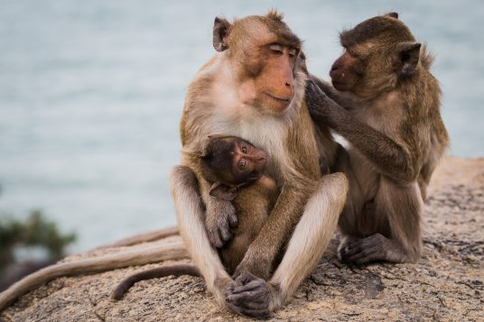 a monkey family is full of love