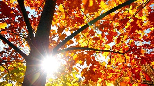 L'été des Indiens se produit en octobre ou au début de novembre dans l'hémisphère nord, et en avril ou au début mai dans l'hémisphère sud. La période de redoux doit durer au moins trois jours où la température sera d'au moins 5 °C au-dessus de la normale saisonnière.