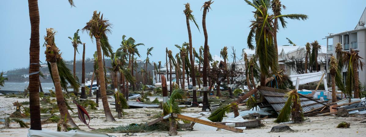 Devant l'hôtel Mercure de Marigot, à Saint-Martin, l'ouragan Irma a arraché les palmiers, mercredi 6 septembre 2017. (LIONEL CHAMOISEAU / AFP)