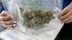 Ce sac contient 30 grammes de cannabis. Ce sera la quantité maximale que les consommateurs pourront porter sur eux. Photo: Radio-Canada
