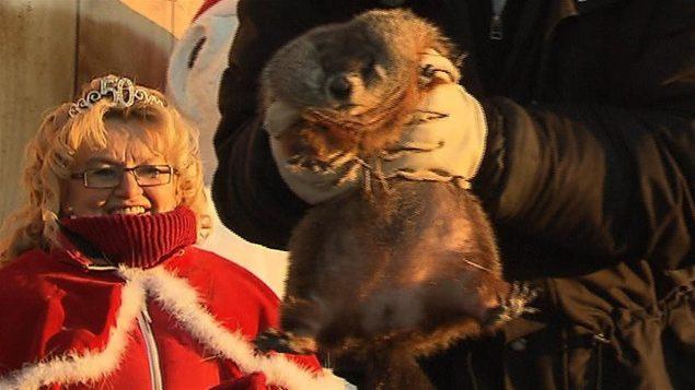 Fred, la marmotte du Québec