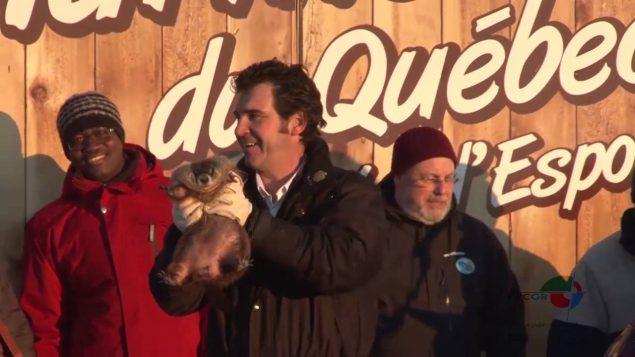 Fred, la marmotte du Québec.