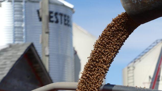 Les producteurs de grains québécois demandent l'aide de l'État