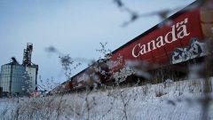 Depuis plusieurs années, des critiques des entreprises ferroviaires dénoncent les retards qu'accuse le transport des céréales. Photo : AFP/Ruth Bonneville/Bloomberg