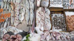 Des poissons disposés sur un étalage dans un marché.
