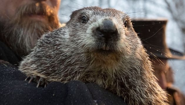 Les marmottes ne s'entendent pas sur l'arrivée hâtive du printemps