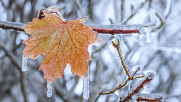 La preuve est faite : les précipitations extrêmes au pays augmentent