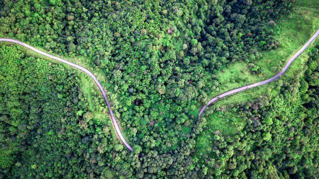Gestion durable des forêts : le Canada en quête de pratiques novatrices