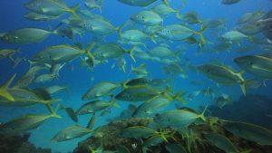 Alors que les océans se réchauffent, les gros poissons peinent à s'adapter
