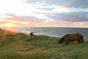 جزيرة الرمل l'île de Sable التي يأوي فيها ما يقرب من 250 حصانا وحشيا محمية من أي تدخل بشري. هي تسرح في هذه البقعة الرملية على شكل هلال بطول 42 كلم وبعرض لا يتعدى 1.3 كلم. (هيئة الإذاعة الكندية)