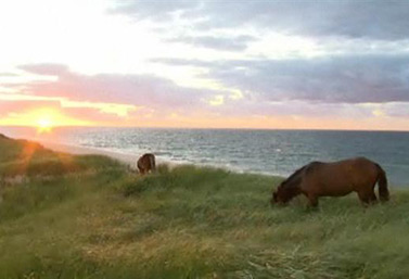 Sable Island is home to about 250 wild ponies, protected from humans. They gallop on this crescent-shaped island that is 42 km long, but never larger than 1.3 km. (CBC)