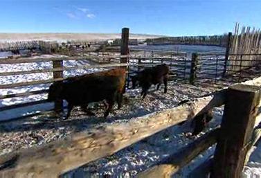 Un cow-boy dans la plaine (Réseau des librairies publiques de l'Alberta)