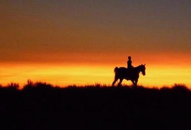 Un ranch spécialisé dans l'élevage du bétail, dans le sud de l'Alberta (CBC News)