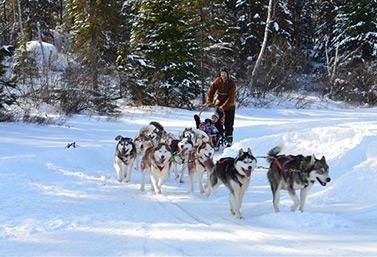 Le traîneau à chiens a de plus en plus d'adeptes étrangers au Canada. Éric Forget, propriétaire du Chenil du chien-loup.  (Radio-Canada/Jean-François Bélanger)