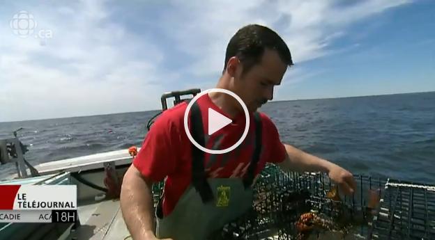 Industrie du homard en Chine : l'art d'attirer les clients avec les nouvelles technologies