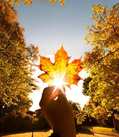 """كندا: """" البلد المثالي"""""""