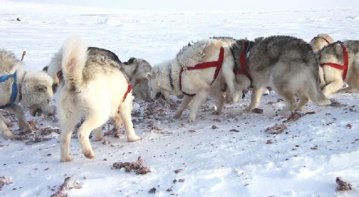 levon_dogs_feeding