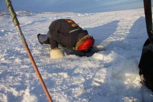 Un chasseur inuit se penche au-dessus d'un trou pour observer ses filets. Photo Levon Sevunts.