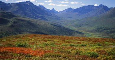 Forêt boréale au Yukon (iStock)