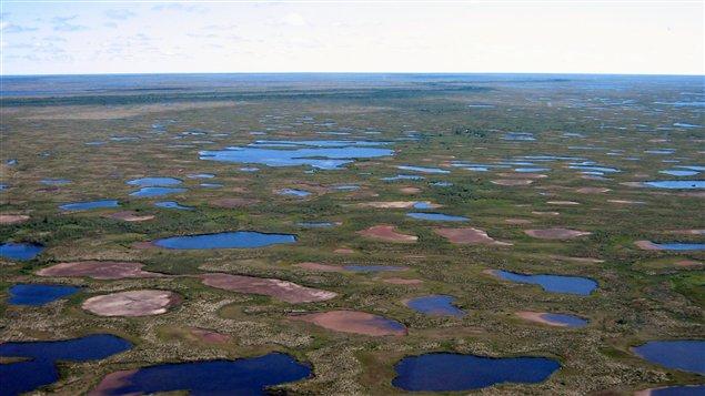 Lacs desséchés dans le Parc national Wapusk près de Churchill, dans le nord du Manitoba. (Photo prise par H.White, juillet 2013)