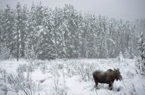 The Canadian Boreal Initiative hopes to ultimately protect about half the country's forest, which makes up fully one-third of the world's such woodlands. (Jonathan Hayward/Canadian Press)