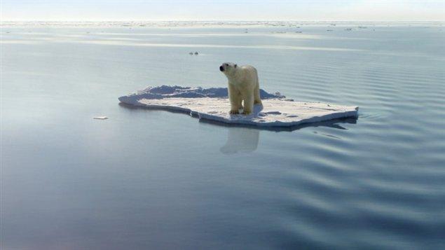 Les changements climatiques menacent à long terme les populations d'ours blancs. (iStock)