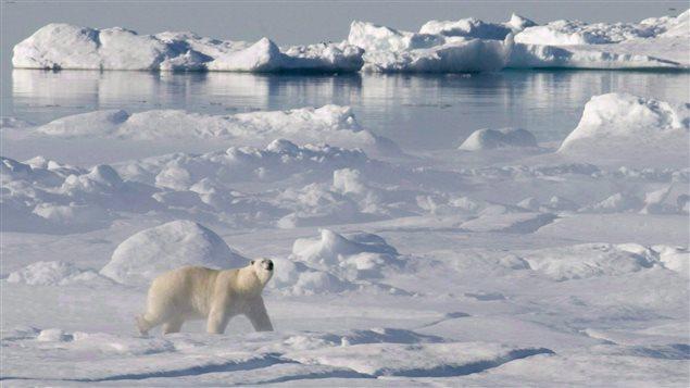 Un ours polaire sur les glaces dans la baie de Baffin, dans l'Arctique (Jonathan Hayward / La Presse Canadienne)
