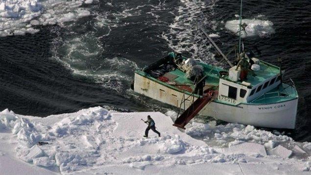 Un chasseur se dirige vers un phoque du Groenland lors de la chasse annuelle sur la côte Est du Canada. Photo prise en 2009 (Andrew Vaughan / La Presse Canadienne)