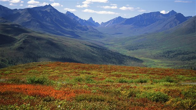 Forêt boréale au Yukon. (iStock)