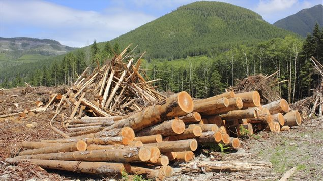 Des billots de bois empilés.  (iStock)