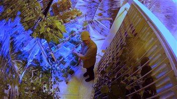 Glenn Scott entouré de plantes de sa serre.(Philippe Morin/CBC)