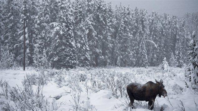 La saison de chasse au Yukon s'étend du mois d'août au mois d'octobre. (Jonathan Hayward/La Presse Canadienne)