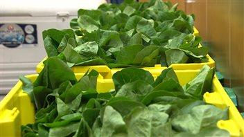 Les produits locaux sont à l'honneur lors du festival culinaire annuel. (Claudiane Samson/ ICI Radio-Canada)