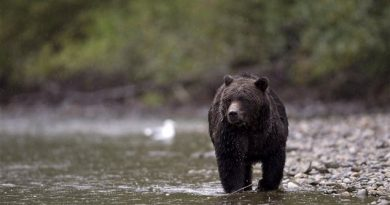rci-ours-grizzly_sn635