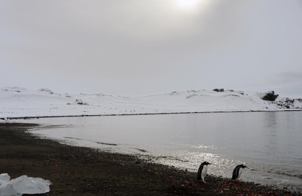 Des pingouins en Antarctique. (iStock)