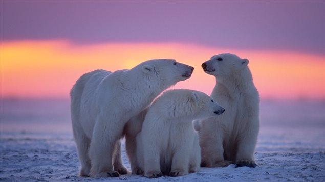 Étant donné le fait que le mercure même à de très faibles concentrations peut être très toxique pour l'environnement, les émissions mondiales qui se déposent principalement dans l'Arctique canadien représentent une réelle menace Crédit photo : Radio-Canada