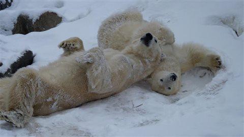ours écrasé russie