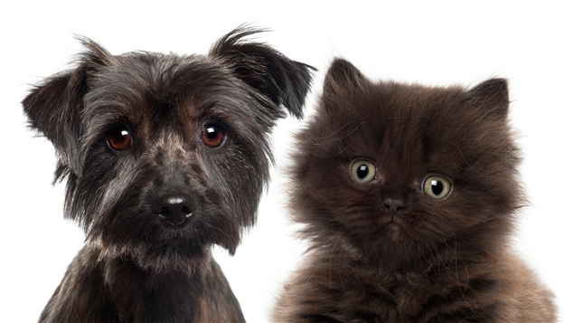Un chiot et un chaton Photo : ISTOCKPHOTO/GLOBALP
