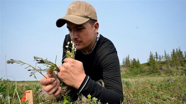 Paul Sokoloff collecte des plantes sur le terrain près de la Rivière Coppermine au Nunavut pendant l'été 2014. (Roger Bull / Musée canadien de la nature)